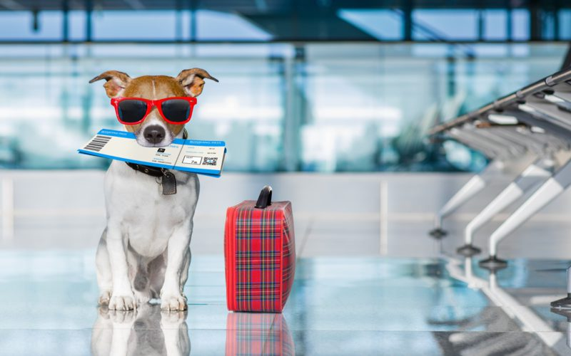 4 accessoires indispensables pour voyager avec un chien ou chat
