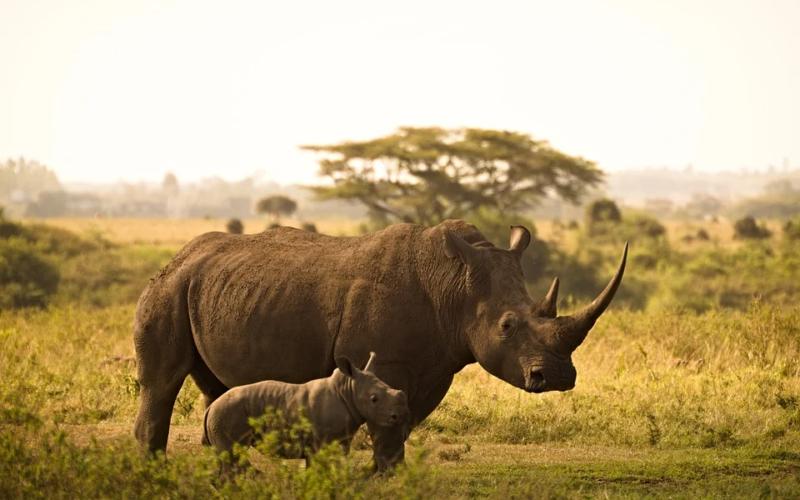 Quelques conseils utiles pour faire un voyage au Kenya
